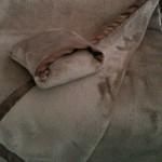 couverture-et-bouillotte-sèche-fleur-du-ciel